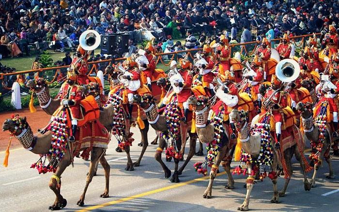 parade dromadaire
