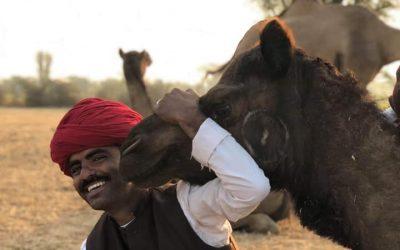 Inde : Ils murmurent à l'oreille des dromadaires …