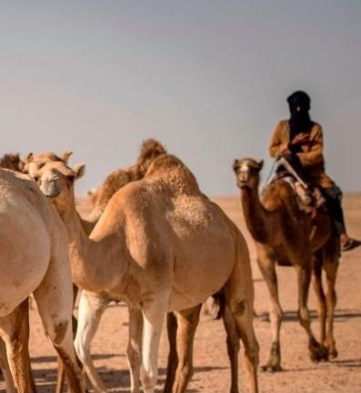Les Gardiens du désert
