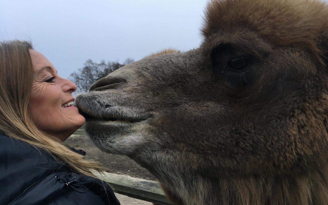 Interview de Karin Peute et ses chameaux en Belgique