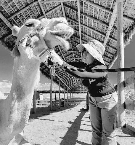Interview de Betsy Mijares la vétérinaire spécialisée dans les dromadaires au Mexique